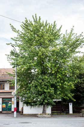 LIFE Tree Check is changing climates in cities